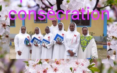 Five New Novices in Congo
